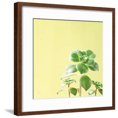 Succulent Simplicity X-Felicity Bradley-Framed Photo