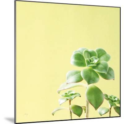 Succulent Simplicity X-Felicity Bradley-Mounted Photo