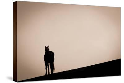 Alone at Sunset-Lisa Cueman-Stretched Canvas Print