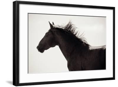 Free Spirit-Lisa Cueman-Framed Photo