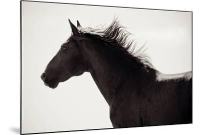 Free Spirit-Lisa Cueman-Mounted Photo
