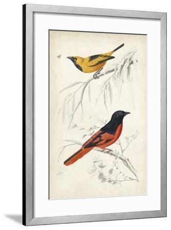 D'Orbigny Birds VIII-M^ Charles D'Orbigny-Framed Art Print