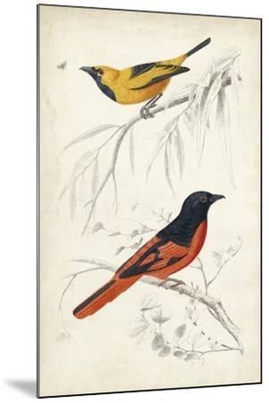 D'Orbigny Birds VIII-M^ Charles D'Orbigny-Mounted Art Print