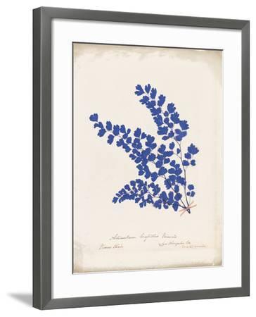 Botanical Fern III Blue Aged-Wild Apple Portfolio-Framed Art Print