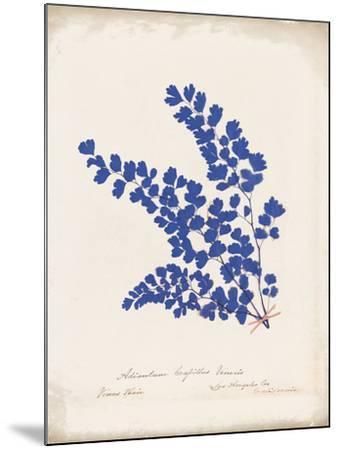 Botanical Fern III Blue Aged-Wild Apple Portfolio-Mounted Art Print