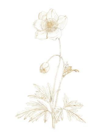 Gilded Botanical II-Wild Apple Portfolio-Framed Art Print