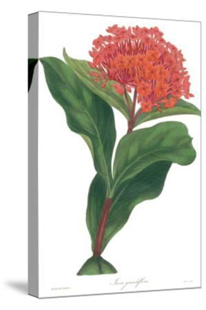 Harlequin Floral on White-Wild Apple Portfolio-Stretched Canvas Print