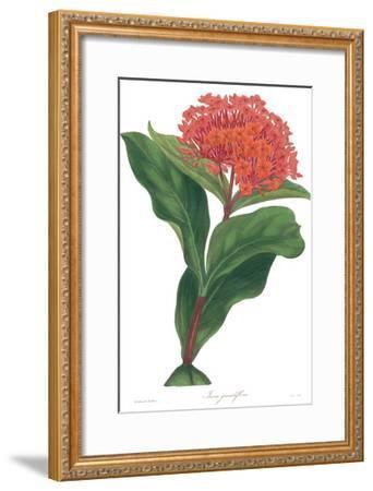 Harlequin Floral on White-Wild Apple Portfolio-Framed Art Print