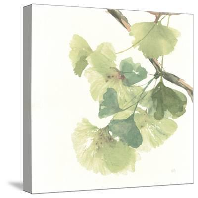 Gingko Leaves II on White-Chris Paschke-Stretched Canvas Print