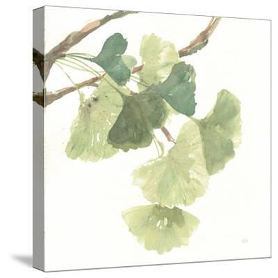 Gingko Leaves I on White-Chris Paschke-Stretched Canvas Print