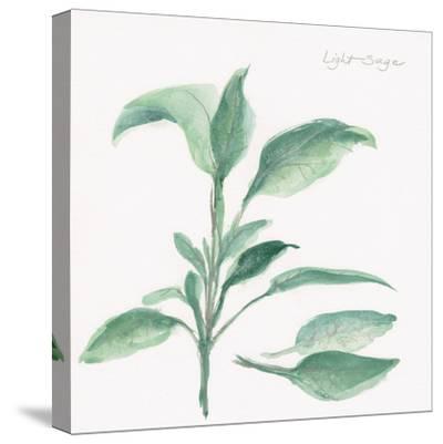 Sage II-Chris Paschke-Stretched Canvas Print