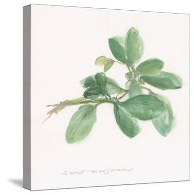 Sweet Marjoram-Chris Paschke-Stretched Canvas Print
