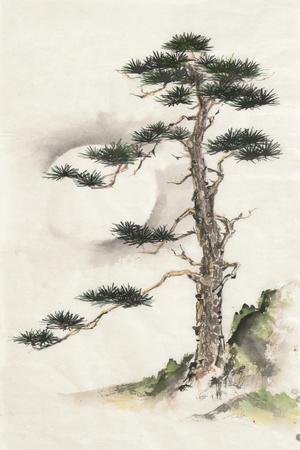 Moon Pine-Chris Paschke-Framed Art Print
