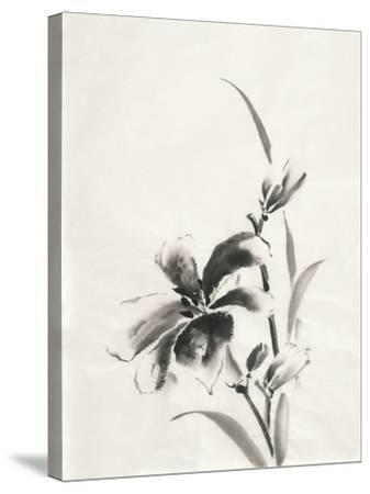 Sumi Daylily IV-Chris Paschke-Stretched Canvas Print