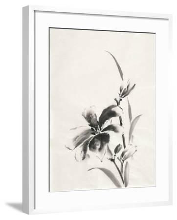 Sumi Daylily IV-Chris Paschke-Framed Art Print