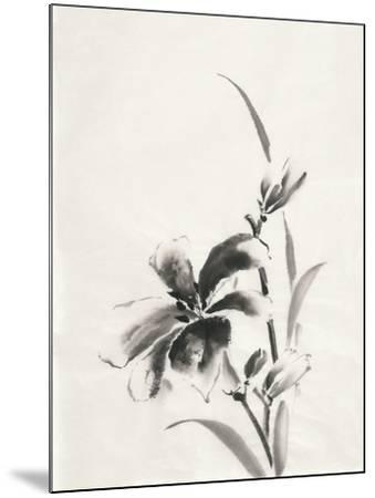 Sumi Daylily IV-Chris Paschke-Mounted Art Print
