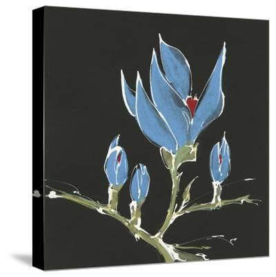 Magnolia on Black I-Chris Paschke-Stretched Canvas Print