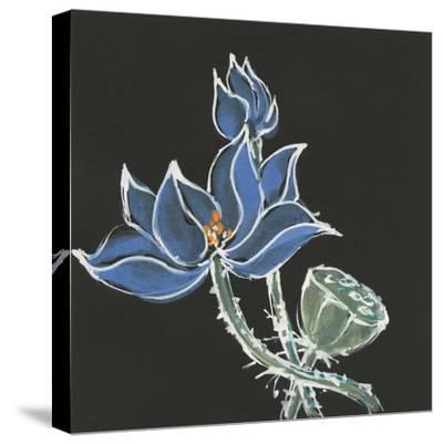 Lotus on Black VI-Chris Paschke-Stretched Canvas Print