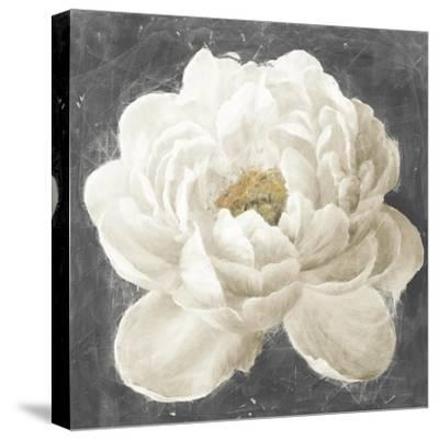 Vivid Floral I White Flower-Danhui Nai-Stretched Canvas Print