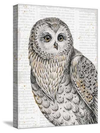 Beautiful Owls IV-Daphne Brissonnet-Stretched Canvas Print