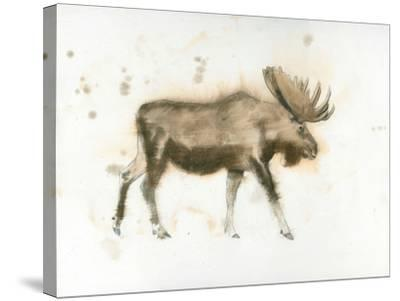 Moose-James Wiens-Stretched Canvas Print