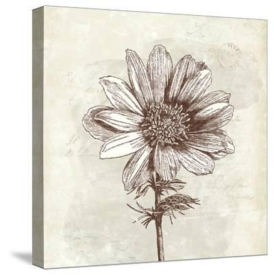 Spa Botanical IV-Katie Pertiet-Stretched Canvas Print