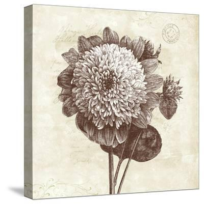Spa Botanical II-Katie Pertiet-Stretched Canvas Print