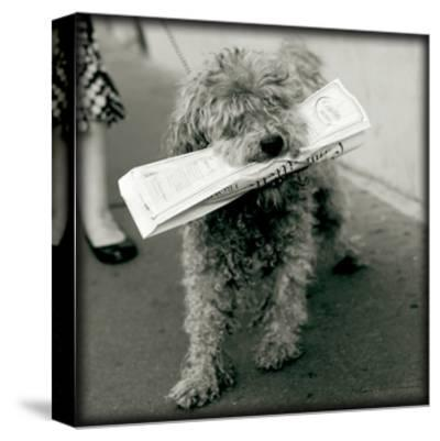 Paris Dog II-Marc Olivier-Stretched Canvas Print