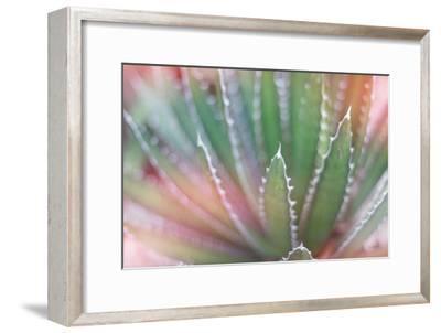 Dream Desert II-Sue Schlabach-Framed Art Print