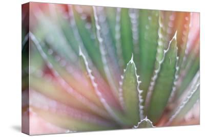 Dream Desert II-Sue Schlabach-Stretched Canvas Print