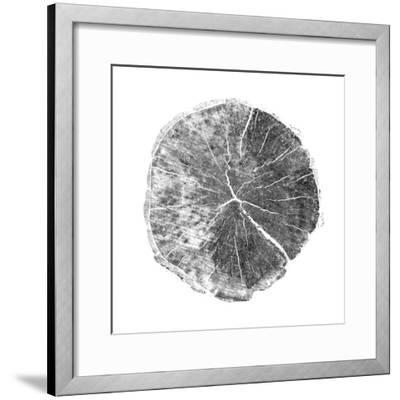 Woodland Years I with Silver Foil-Sue Schlabach-Framed Art Print