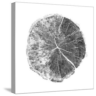 Woodland Years I with Silver Foil-Sue Schlabach-Stretched Canvas Print