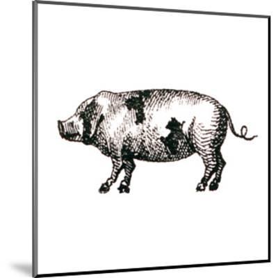 Farm Animal Icons II-Sue Schlabach-Mounted Art Print
