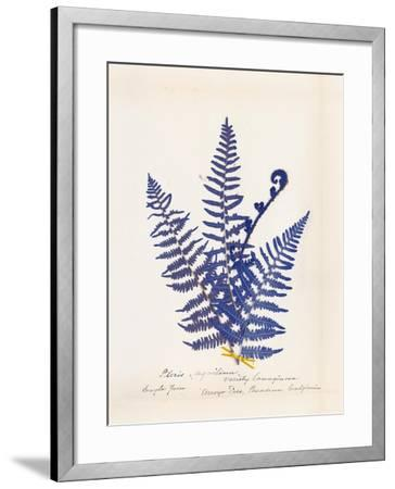 Botanical Fern IV Blue-Wild Apple Portfolio-Framed Art Print