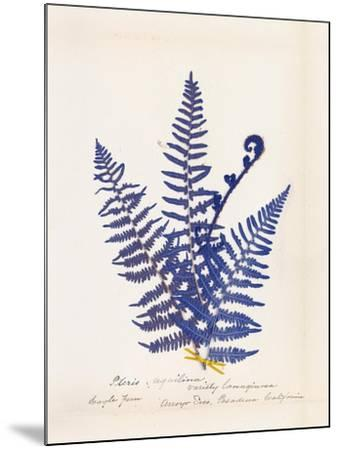 Botanical Fern IV Blue-Wild Apple Portfolio-Mounted Art Print