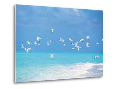 Flock of Birds Migrating Over Seascape--Metal Print