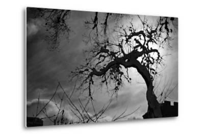 Spooky Tree--Metal Print