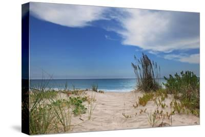 Dune Trail-Brent Anderson-Stretched Canvas Print
