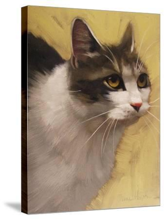 Derby Cat-Diane Hoeptner-Stretched Canvas Print