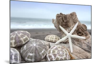 Crescent Beach Shells 5-Alan Blaustein-Mounted Photographic Print