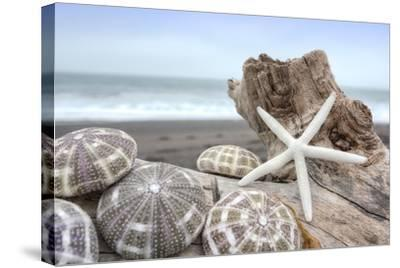 Crescent Beach Shells 5-Alan Blaustein-Stretched Canvas Print