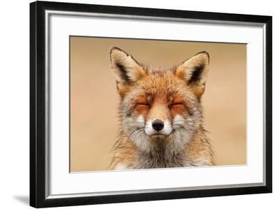 Zen Fox Red Portrait-Roeselien Raimond-Framed Art Print