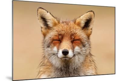 Zen Fox Red Portrait-Roeselien Raimond-Mounted Art Print
