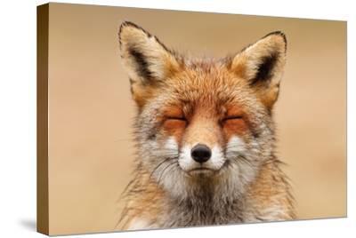 Zen Fox Red Portrait-Roeselien Raimond-Stretched Canvas Print