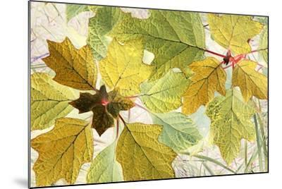 Golden Oak-Judy Stalus-Mounted Photographic Print