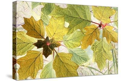 Golden Oak-Judy Stalus-Stretched Canvas Print