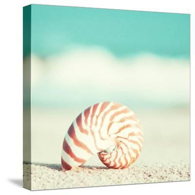 Nautilus-Carolyn Cochrane-Stretched Canvas Print