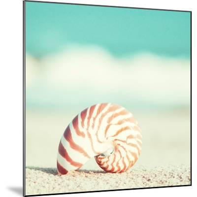 Nautilus-Carolyn Cochrane-Mounted Photographic Print