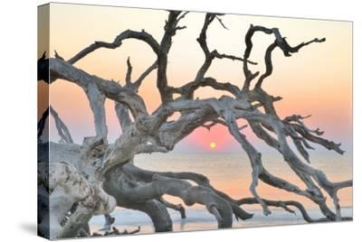 Sunrise Sentinel-Steve Vaughn-Stretched Canvas Print