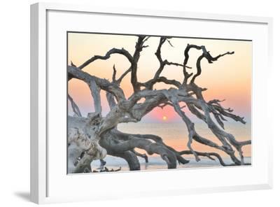 Sunrise Sentinel-Steve Vaughn-Framed Photographic Print